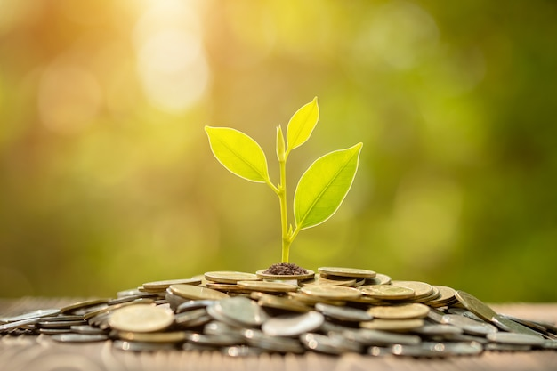 Coin stack with young green sprout on top. business success, financial or money growing concept Premium Photo