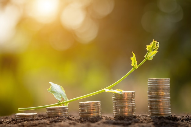 Coin stack with young green vine on top. business success or money growing concept Premium Photo