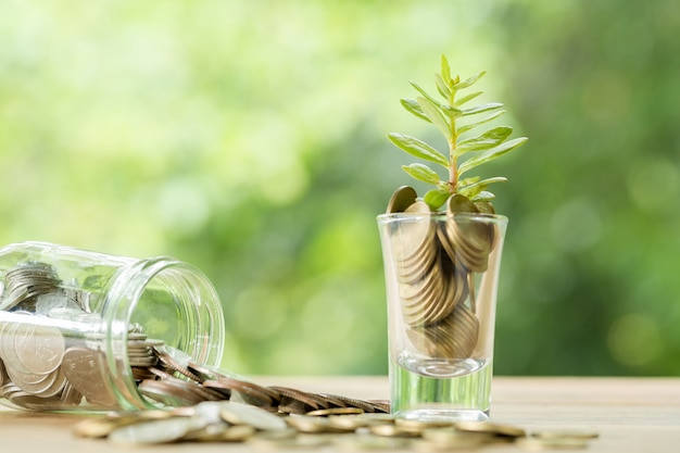 Coins in a glass with a small tree Free Photo