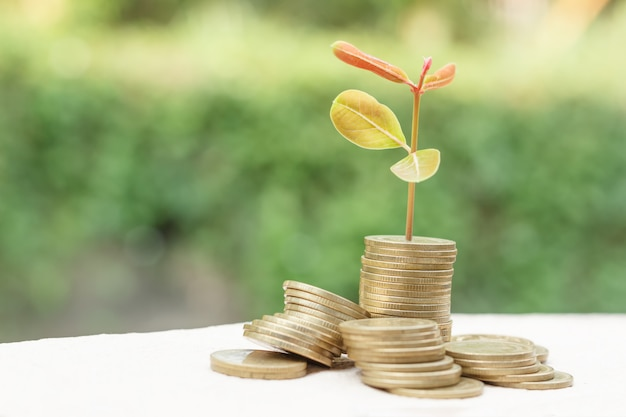 Coins for saving and blurry background Premium Photo