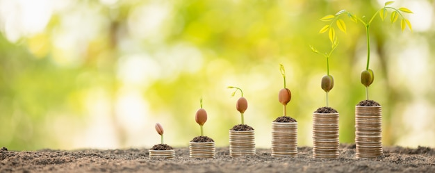 Coins stacked with young green sprout on top Premium Photo