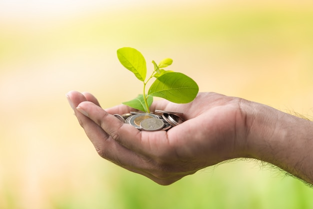 A coins with tree in people hands in saving and growing money concept Premium Photo