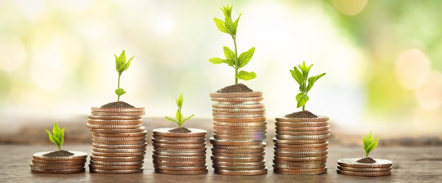 Coins with young plant on table with backdrop blurred of nature Premium Photo
