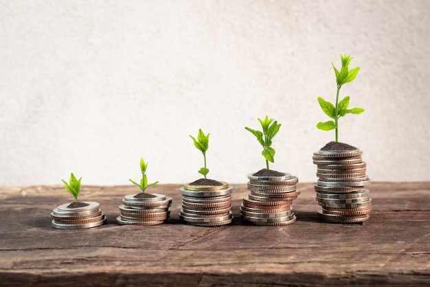 Coins with young plant on table with backdrop cement wall. Premium Photo