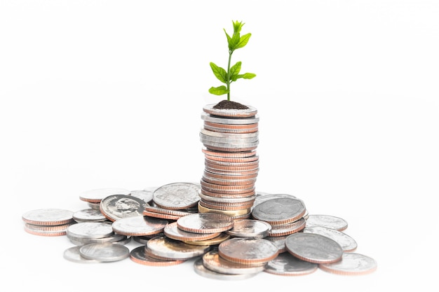 Coins with young plant on white table. Premium Photo