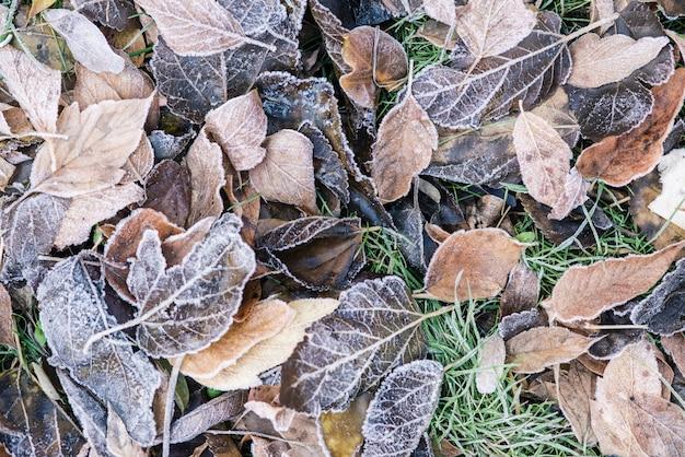 寒い気候と凍った葉と草の屋外の眺め Premium写真