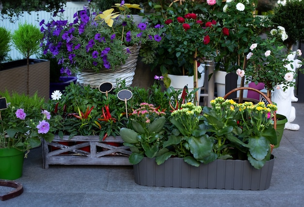 Collection of colorful flowers, houseplants and ornamental plants in pots against wall near florist shop entrance. Premium Photo