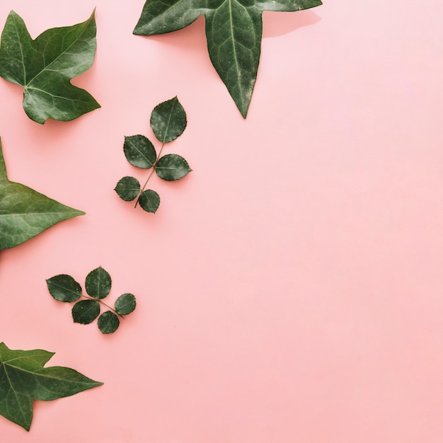 Collection of different green leaves on pink surface Free Photo