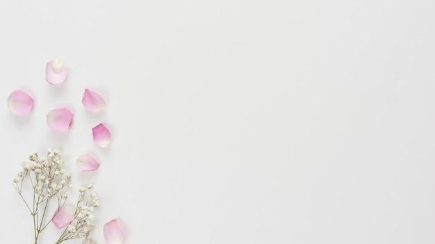신선한 장미 꽃잎과 식물 나뭇 가지의 컬렉션 무료 사진