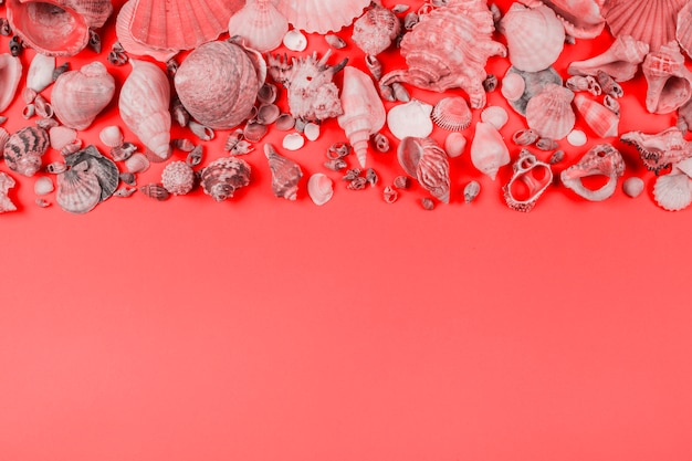 Collection of seashells on coral background Free Photo