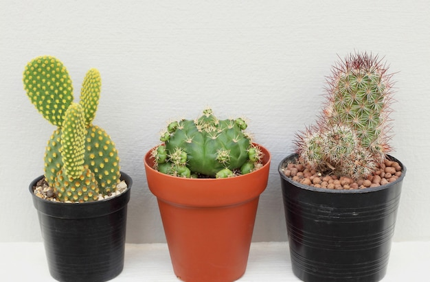 Collection of small cactus or succulent plants on white and grey background. Premium Photo