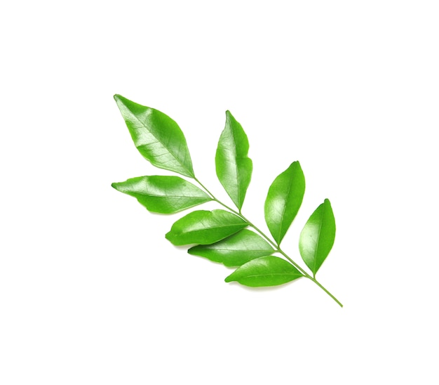 Collection tropical green leaf Premium Photo