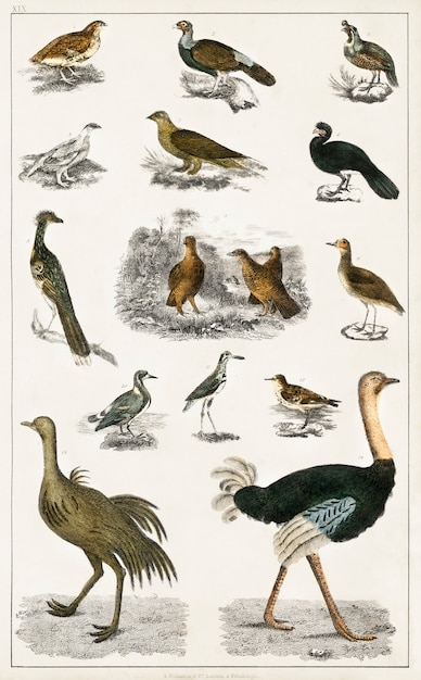 Collection of various birds from a history of the earth and animated nature (1820) by oliver goldsmi Free Photo