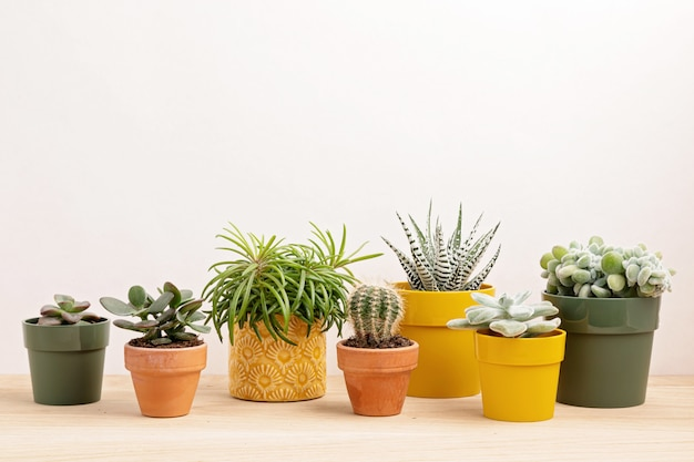Collection of various plants in colored pots. Premium Photo