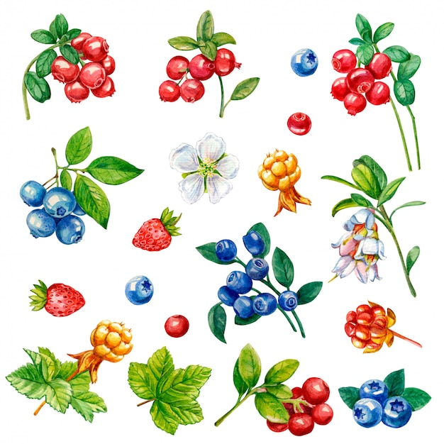 Collection of wild berries on a white background Premium Photo