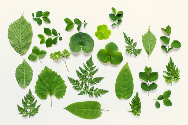Collection of wild forest leaves of various types Premium Photo