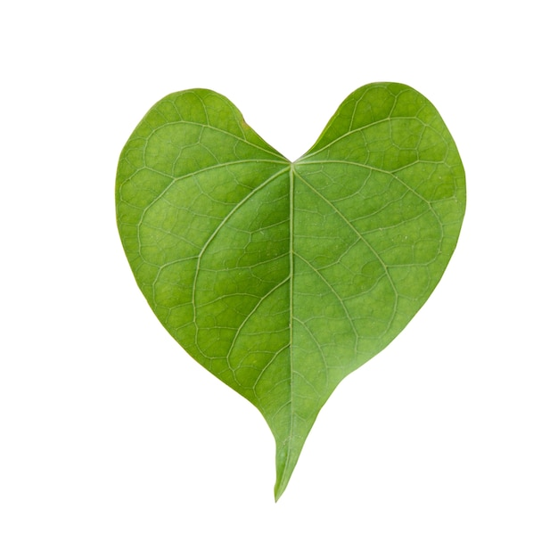Heart Shaped Leaves Vectors, Photos And PSD Files