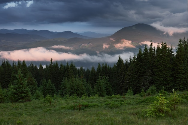Colored sunrise in forested mountain slope with fog. misty carpathian landscape Free Photo