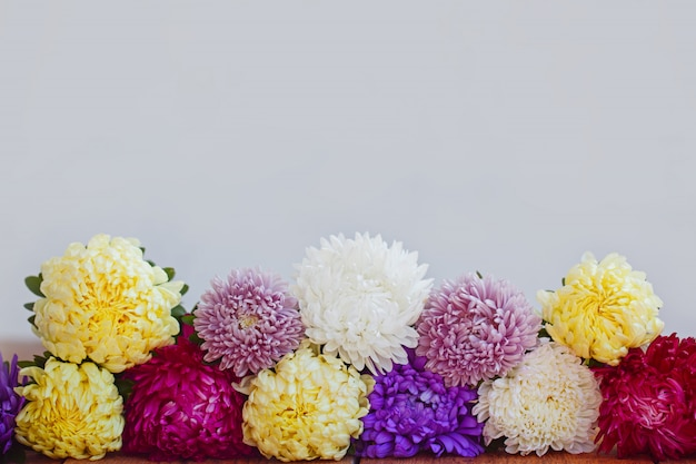 Colorful aster flowers on wooden background. callistephus chinensis. Premium Photo