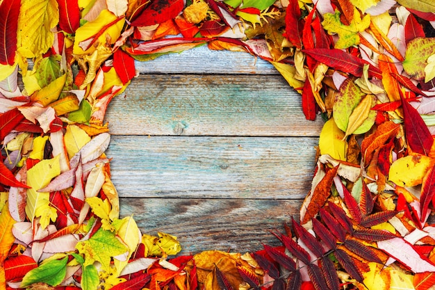 Colorful Autumn Background Of Bright Leaves With Round Frame