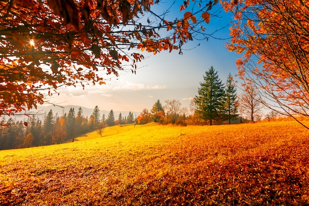 Colorful autumn landscape Premium Photo