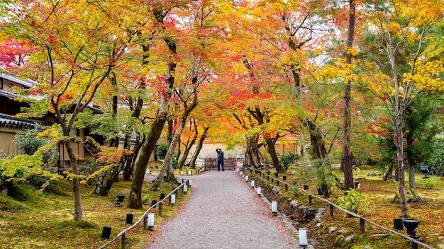 Красочные осенние листья и прогулка в парке, киото в японии. фотограф делает фото осенью. Бесплатные Фотографии