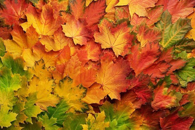 Colorful autumn leaves background with copy space. cozy fall mood. season and weather concept Premium Photo