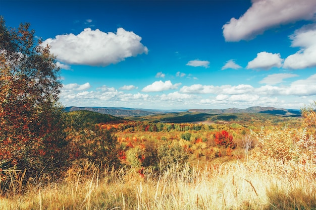 Colorful autumn rural landscape and blue sky with cumulus clouds Premium Photo
