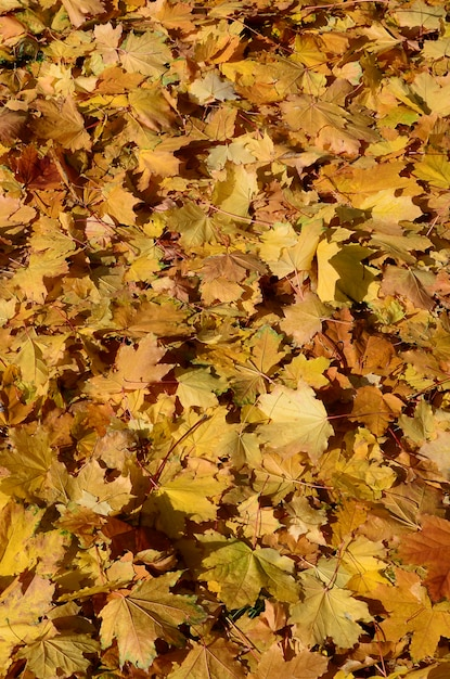 Colorful backround image of fallen autumn leaves perfect for seasonal use Premium Photo