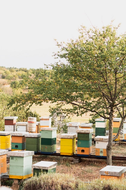 Colorful bee hives on the field Free Photo