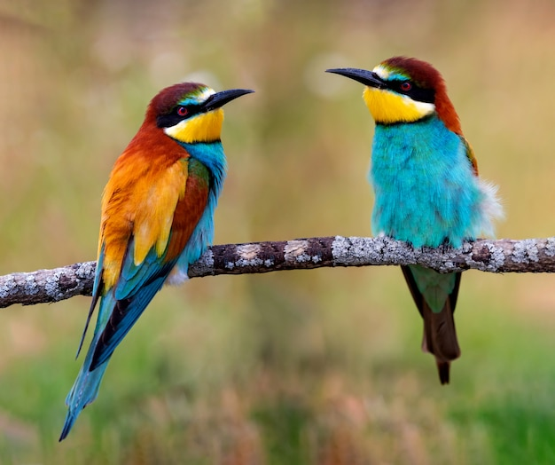 Colorful birds on a branch Premium Photo