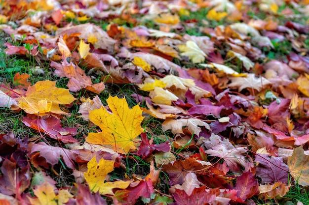 Красочные опавшие листья, лежащие на земле в парке, красивая осень на открытом воздухе Premium Фотографии