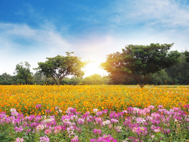 Colorful flower meadow and blue sky with white cloud. Premium Photo