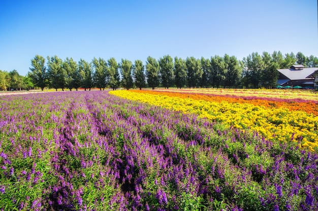 Colorful flowers in the field and blue sky. Premium Photo