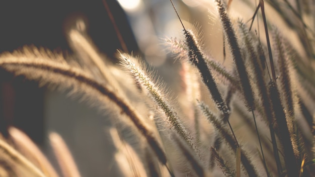 Colorful flowers grass made with gradient for background Premium Photo