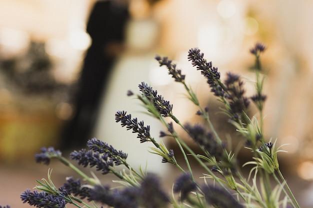 Красочные цветы на солнце с тычинками и пыльцой Premium Фотографии