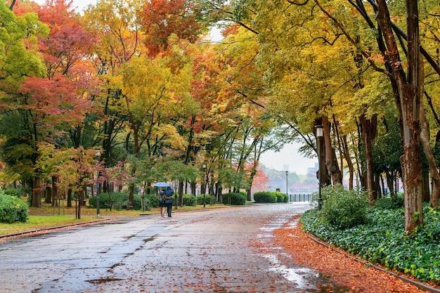 Красочная листва в осеннем парке. осенние сезоны. Бесплатные Фотографии
