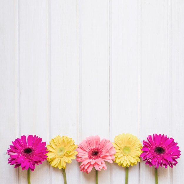 Colorful gerberas on white Free Photo