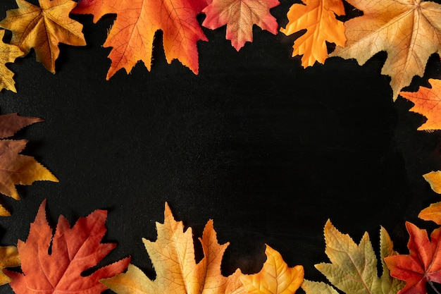 Colorful leaves on black background Free Photo