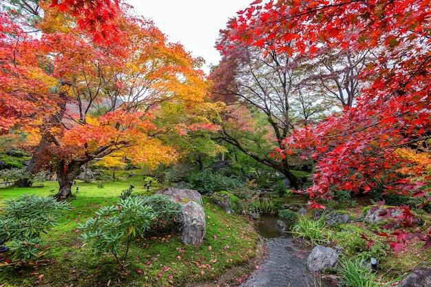 가을 공원, 일본에서 화려한 단풍. 무료 사진