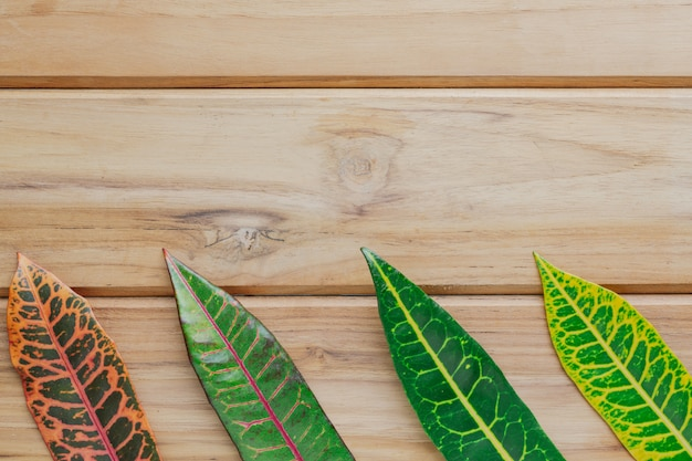 Colorful leaves placed on a brown wood scene. Free Photo