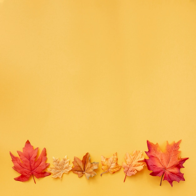 Colorful leaves on yellow background Free Photo