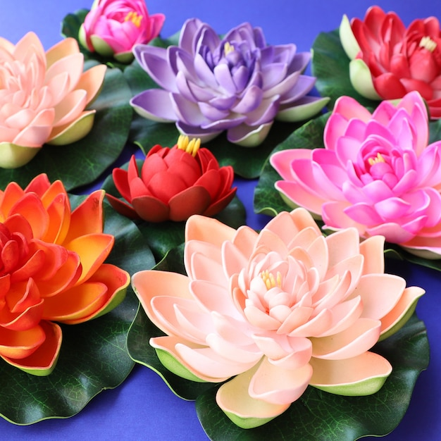 colorful lotus flowers background photo free download