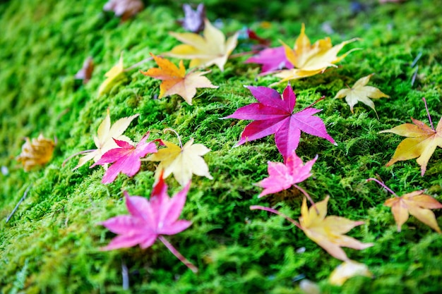 Colorful maple leaves in autumn. Free Photo