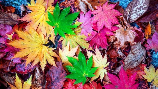 가을 화려한 단풍 무료 사진