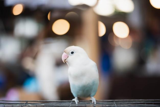 Красочный попугай, сидящий на клетке. Premium Фотографии