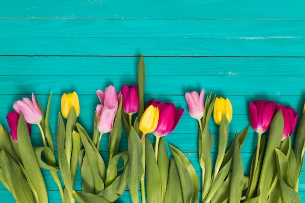 Colorful tulip flowers arranged on bottom of green wooden background Free Photo