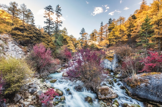 Colorful waterfall in autumn forest Premium Photo