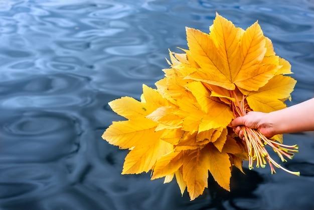 Красочный желтый осенний кленовый лист букет на фоне голубой воды | Премиум  Фото