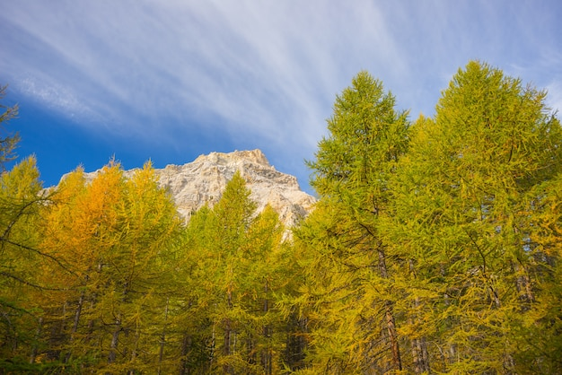 The colors of autumn in the alps Premium Photo